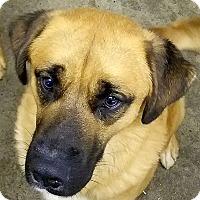 Adopt A Pet :: Spawn - Paducah, KY