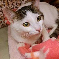 Adopt A Pet :: Sabrina - Overland Park, KS