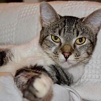 Adopt A Pet :: Charley - Hammond, LA