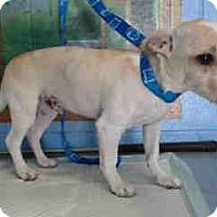 Adopt A Pet :: URGENT ON 5/24  San Bernardino - San Bernardino, CA