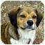 Photo 1 - Beagle/Terrier (Unknown Type, Small) Mix Dog for adoption in Winnsboro, South Carolina - Precious