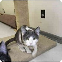Adopt A Pet :: Cutie Pie - Milwaukee, WI