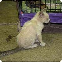 Adopt A Pet :: Metzo - Owasso, OK