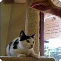 Adopt A Pet :: Grayson - Milwaukee, WI