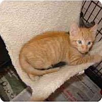Adopt A Pet :: Charlie - Arlington, VA