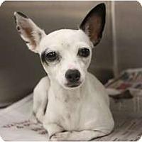 Adopt A Pet :: Dolly - Arlington, TX