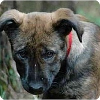 Adopt A Pet :: Gidget - Portland, OR