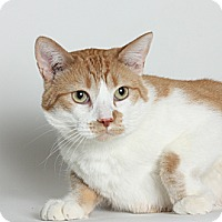 Adopt A Pet :: Mavrick - Stockton, CA