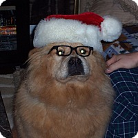Adopt A Pet :: Teddy - Tillsonburg, ON