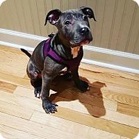 Adopt A Pet :: Alma - nashville, TN