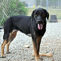 Adopt A Pet :: Carlie - Tanner, AL