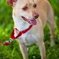 Adopt A Pet :: Newton - Miami, FL