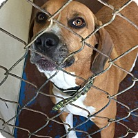 Adopt A Pet :: Redkin - Newburgh, IN