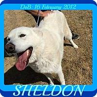 Adopt A Pet :: SHELDON - Allentown, PA