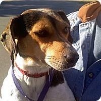 Adopt A Pet :: Aubrey - Albany, NY