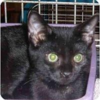 Adopt A Pet :: Dante - Bedford, MA