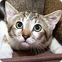 Adopt A Pet :: Lindy - Irvine, CA