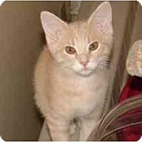 Adopt A Pet :: Bear - Milwaukee, WI