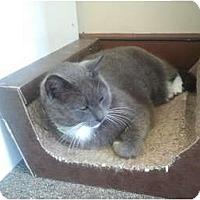 Adopt A Pet :: Sassy (SO) - Little Falls, NJ