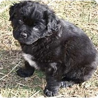 Adopt A Pet :: Curley - Glastonbury, CT