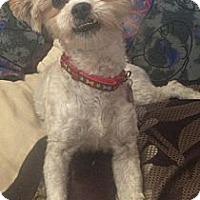 Adopt A Pet :: Miley - Oceanside, CA