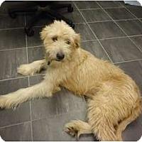 Adopt A Pet :: Camilla - Arlington, TX