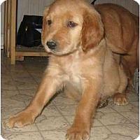 Adopt A Pet :: Golden Girls - Chandler, IN