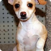 Adopt A Pet :: Kima - Gilbert, AZ