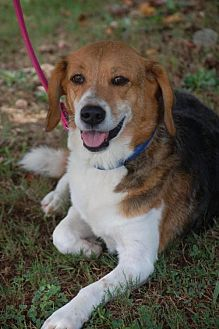Beagle Mix Dog for adoption in Loganville, Georgia - Dinah