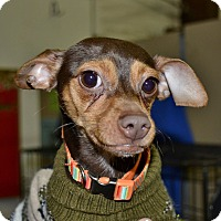 Adopt A Pet :: Turbo - Meridian, ID
