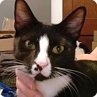 Adopt A Pet :: Jasper - Charlotte, NC