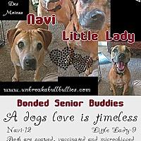 Adopt A Pet :: Nevaeh - Des Moines, IA