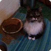 Adopt A Pet :: Mitzi - Delmont, PA
