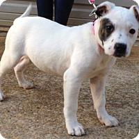 Adopt A Pet :: Loretta - Simpsonville, SC