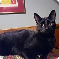 Adopt A Pet :: Ringo (JT) - Little Falls, NJ