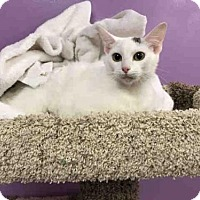 Adopt A Pet :: MARY POPPINS - Olivette, MO
