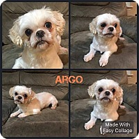 Adopt A Pet :: Argo - Garden City, MI