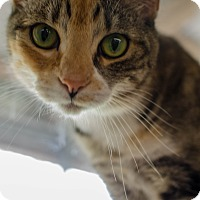 Adopt A Pet :: Tiger Lilly - Greenwood, SC