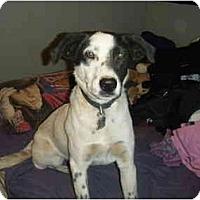 Adopt A Pet :: Brando - Phoenix, AZ