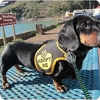 Adopt A Pet :: Martha - San Jose, CA