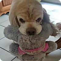 Adopt A Pet :: Beckett - Sugarland, TX