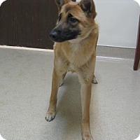 Adopt A Pet :: Brownie - Gary, IN