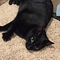 Adopt A Pet :: Momma B - Trevose, PA
