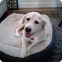 Adopt A Pet :: Yelo - San Francisco, CA