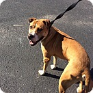 Adopt A Pet :: Brody