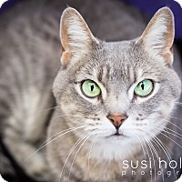 Adopt A Pet :: Raven - Colorado Springs, CO
