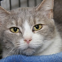 Adopt A Pet :: Sister (Spayed) - Marietta, OH