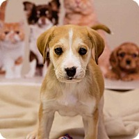 Adopt A Pet :: Oliver - Lexington, TN
