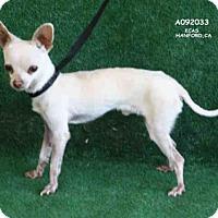 Adopt A Pet :: A092033 - Hanford, CA