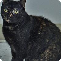 Adopt A Pet :: Lorelia - Chambersburg, PA